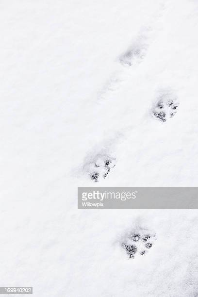 Running Dog Paw Prints in Snow
