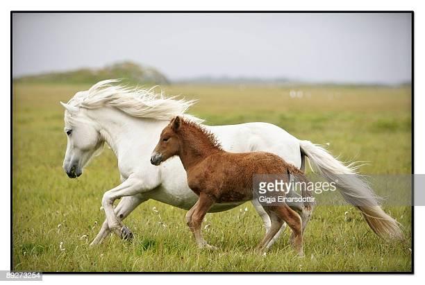 Running horses....