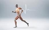 Running man showing muscles, bones and a heart beart pulse