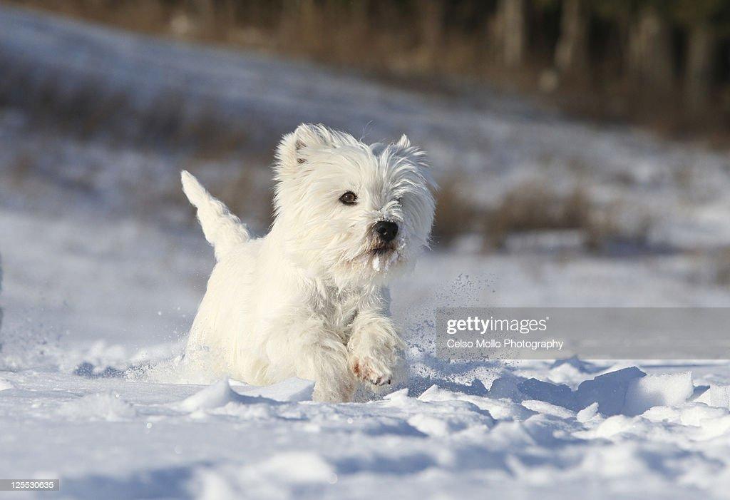 Running on snow : Stock Photo