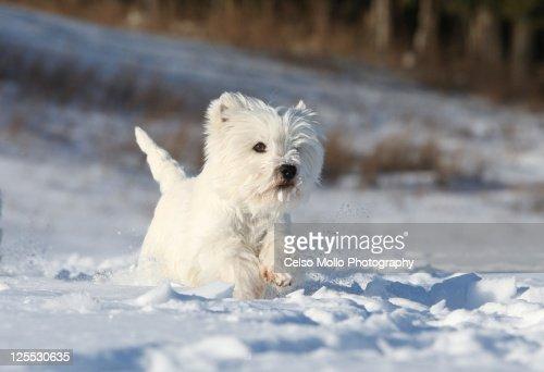 Running on snow