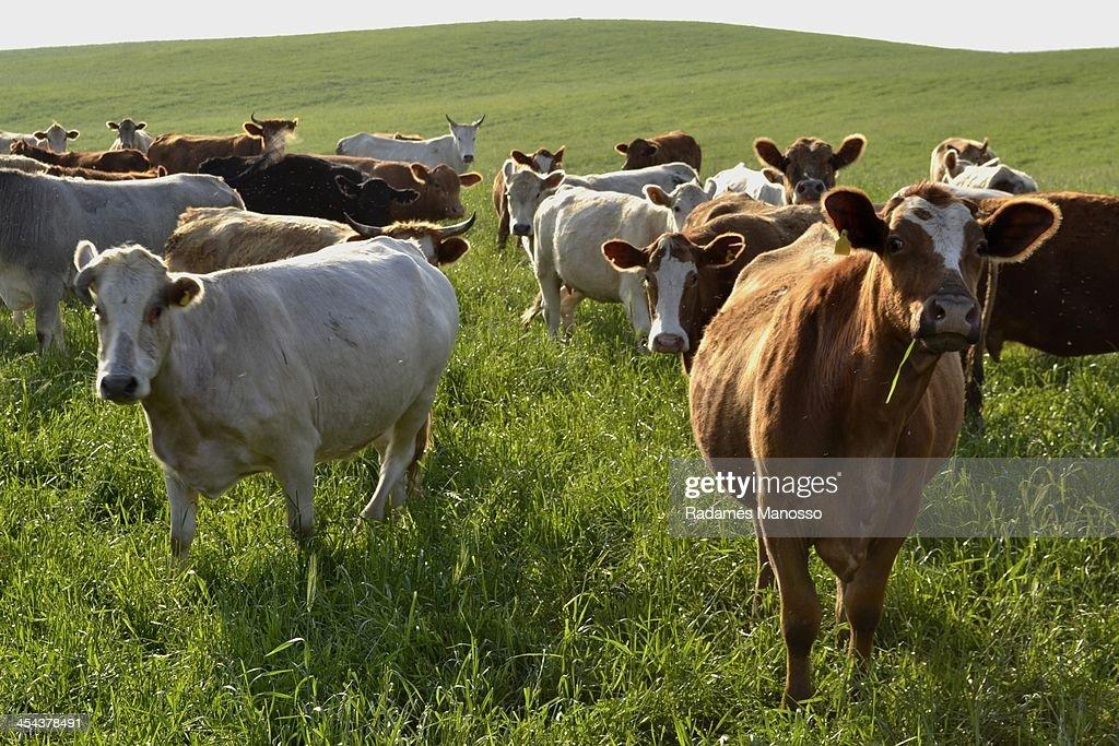 Rural area of Lapa, Paraná : Foto de stock