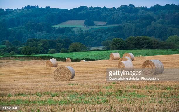 Rural Farm Field Landscape in the Corrèze, France