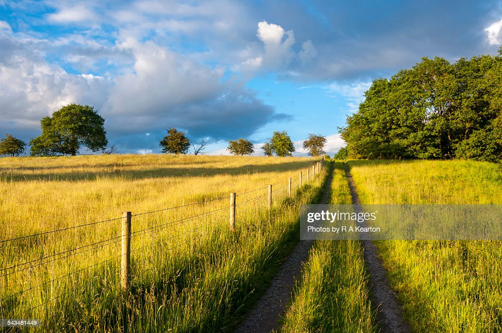 Rural farm track in summer
