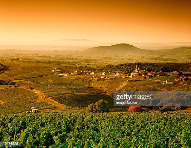 Rural landscape between Vinzelles and Saint-Amour-Bellevue, Saone-et-Loire, Bourgogne, France