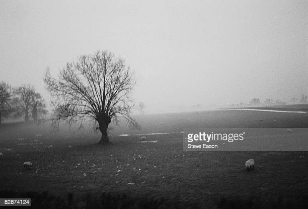A rural landscape in the Forest of Dean in Gloucestershire April 1988