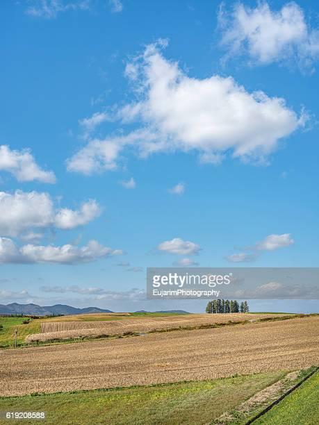 Rural landscape of Hokkaido
