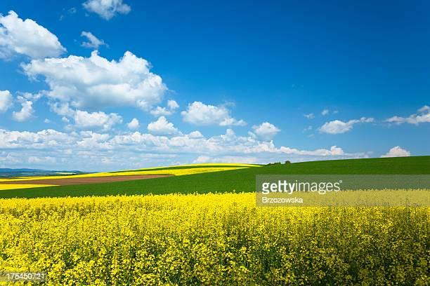 Ländliche Landschaft
