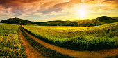 Rural landscape panorama with a meadow at sunset, hills on the horizon and a curved path leading to the orange sky