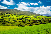 Rural Landscape With Pastures In Ireland