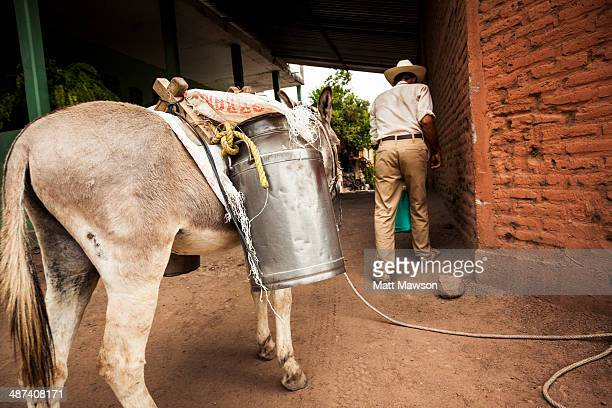 Rural Mexican Milkman and his Donkey