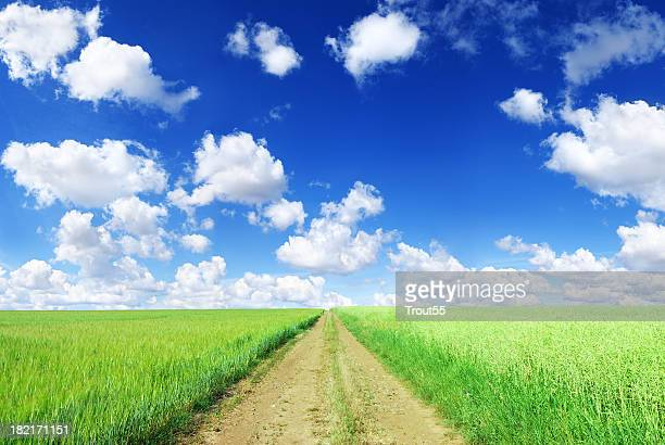 Rural path among green field landscape