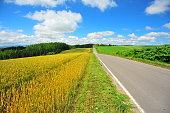 Rural Road at Countryside of Biei, Hokkaido, Japan