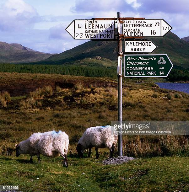 Rural road signs near Kylemore Abbey, Co Galway, Ireland