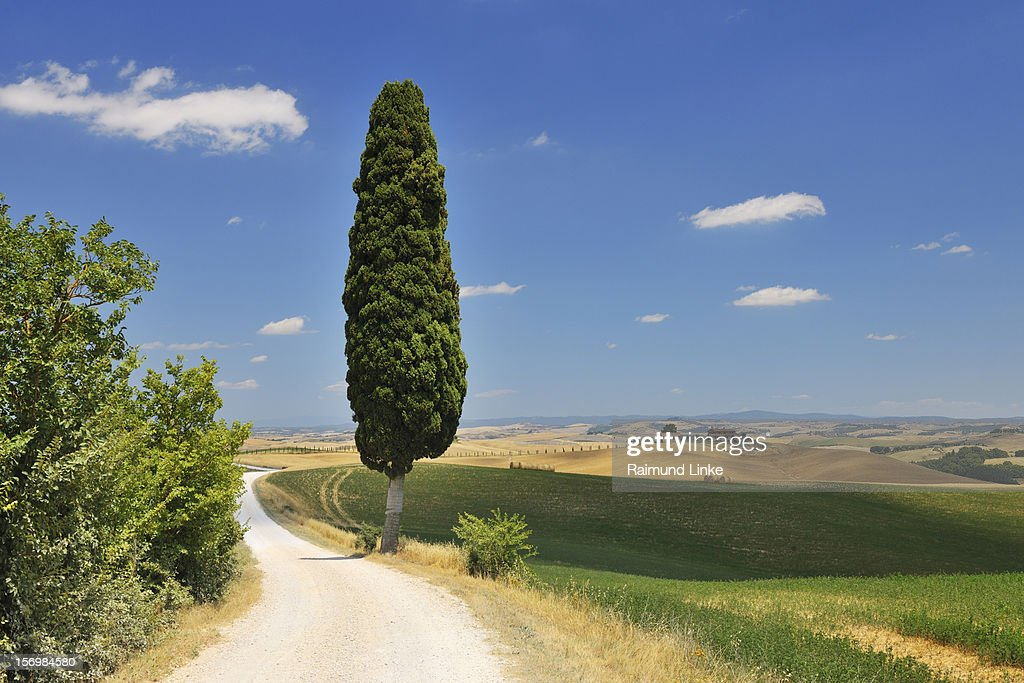 Rural Road with Cypress Tree : Stock Photo