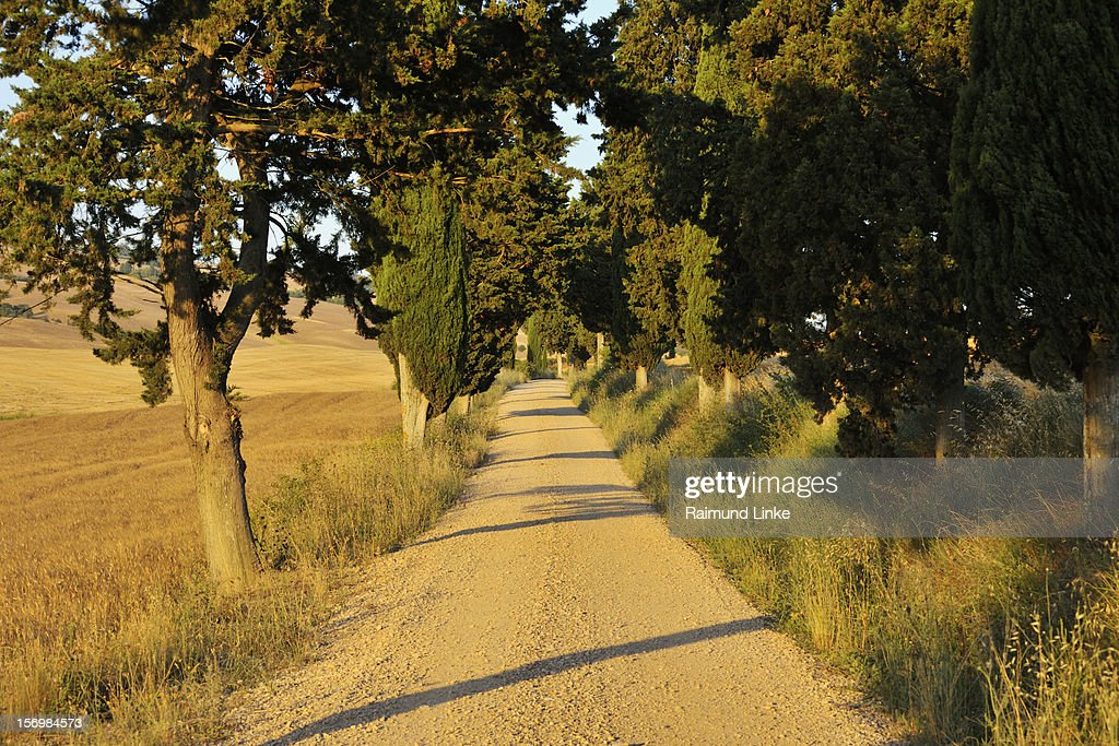 Rural Road with Cypress Trees : Stock Photo