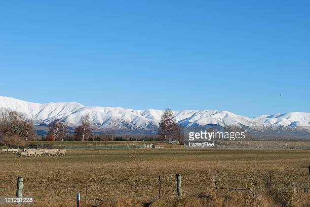 Rural Scene,  Distant Southern Alps, Canterbury, NZ