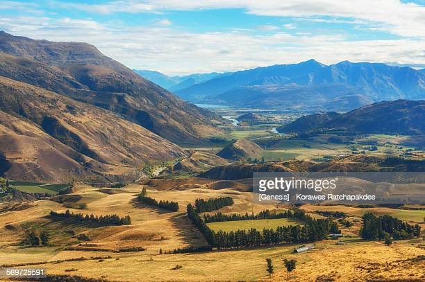 Rural scene in New Zealand