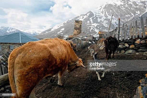 Rural scene in Ushguli Georgia