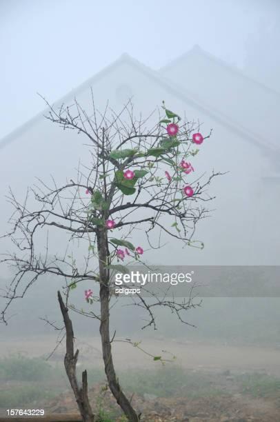 Rural Scene of autumn