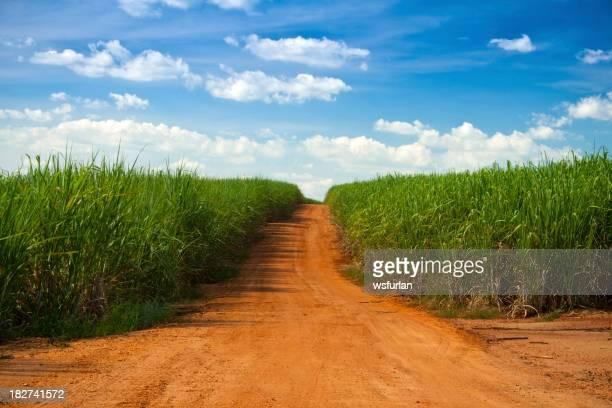 Rural scenic