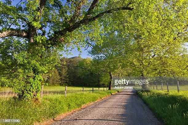 Rural Sparks Lane in the morning