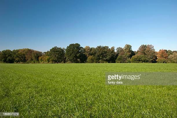 Rural spring setting