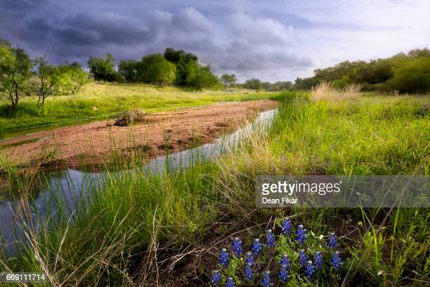Rural Stream and Wildflowers in Central Texas