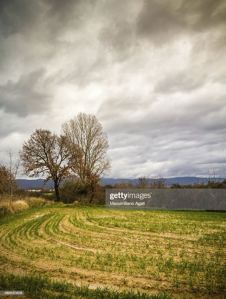 Rural Tuscany : Stock Photo