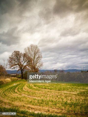 Rural Tuscany : Stockfoto