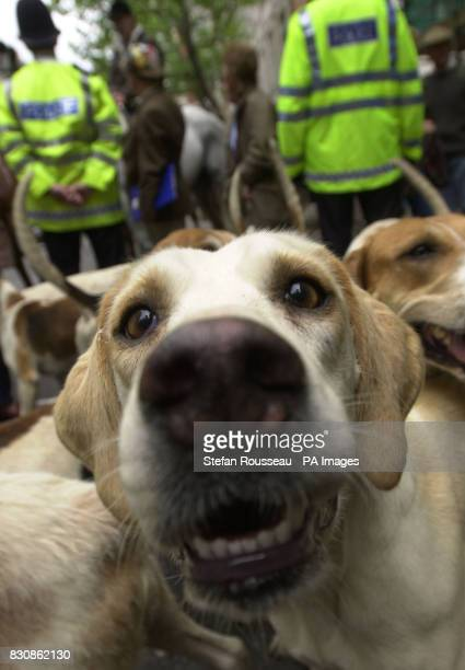 Rural workers from all over Britain protest in central London with their dogs and horses to stepup their opposition to any Government move to ban...