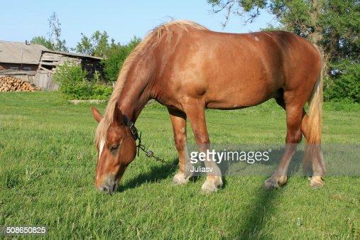 Rural workhorse : Stock Photo