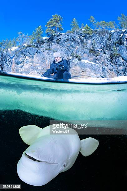 Russia, polar circle, man and beluga whale