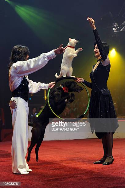 CHABANAS Russian cat and dog trainers perform during a show at the Massy circus on January 13 2011 as part of the Circus International Festival that...