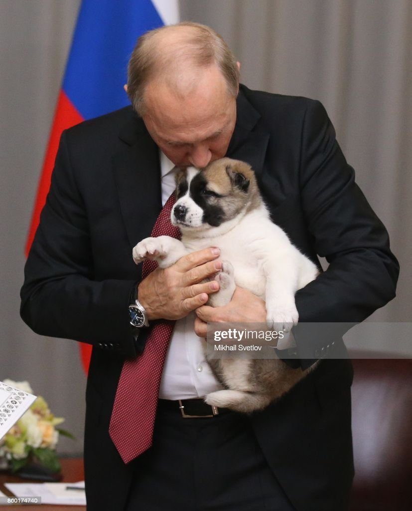 Russian President Vladimir Putin caresses his new Central Asian Shepherd puppy presented to him by Turkmen President Gurbanguly Berdymuhakmedov (not pictured) during their meeting on October, 12, 2017 in Sochi, Russia. Leaders of ex-Soviet states have gathered in Sochi for the Commonwealth of Independent States (CIS) and Eurasian Economic Union (EES) summits.