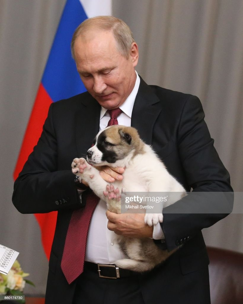 Russian President Vladimir Putin holds his new Central Asian Shepherd puppy presented to him by Turkmen President Gurbanguly Berdymuhakmedov (not pictured) during their meeting on October, 12, 2017 in Sochi, Russia. Leaders of ex-Soviet states have gathered in Sochi for the Commonwealth of Independent States (CIS) and Eurasian Economic Union (EES) summits.