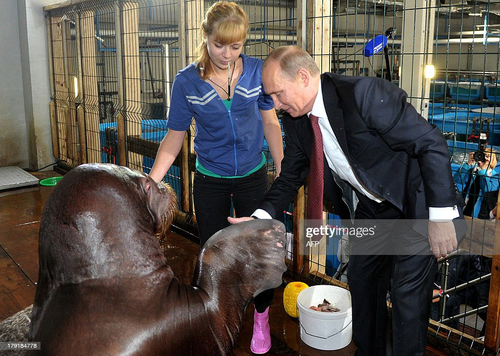 Russian President Vladimir Putin (R) touches a walrus on September 1, 2013 during his visit at an oceanarium on Russky (Russian) island near the city of Vladivostok. Putin is on a three-day visit to the Russian Far East.