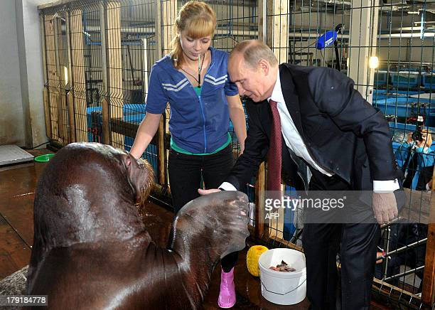 Russian President Vladimir Putin touches a walrus on September 1 2013 during his visit at an oceanarium on Russky island near the city of Vladivostok...