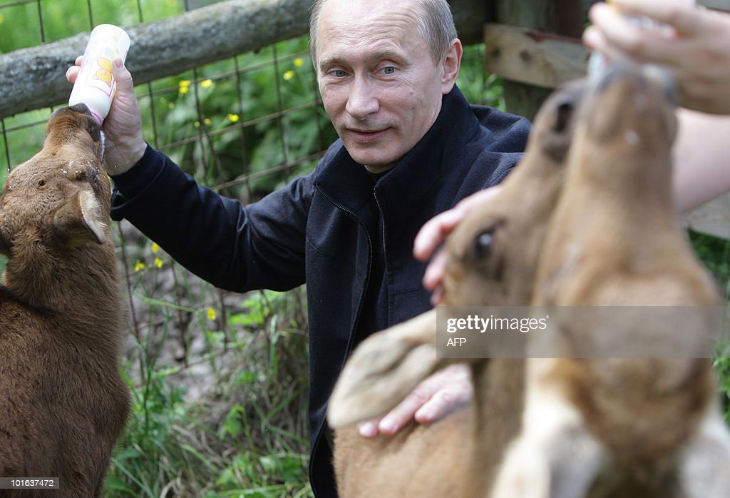 Russian Prime Ministers Vladimir Putin gives feeds milk to a moose on June 5, 2010 during a visit to the Moose Island National Park in Moscow on the eve of World Environment Day.
