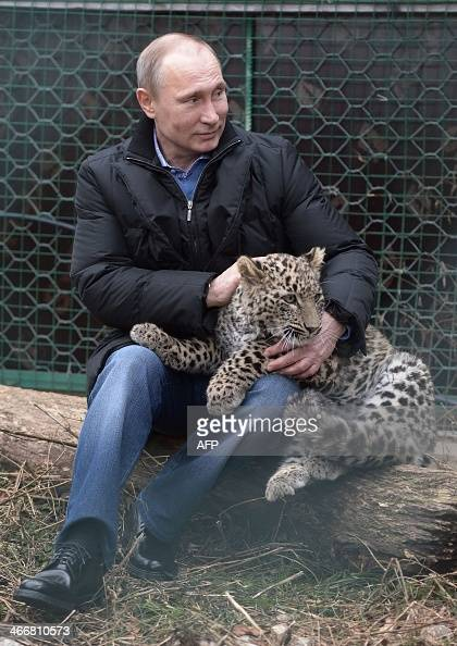 National Animal Of Russia Stock Photos and Pictures ...