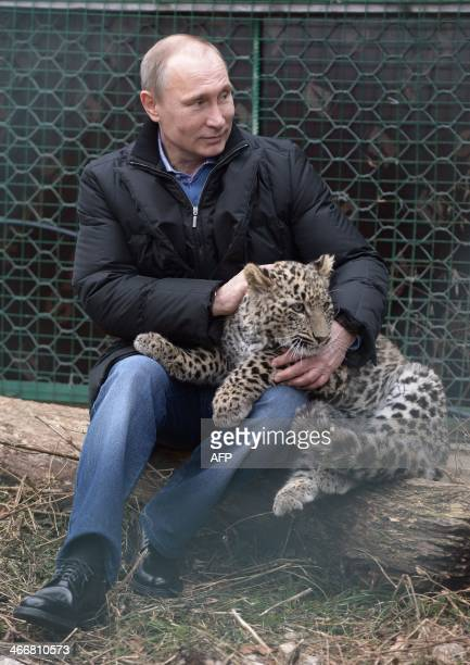 Russia's President Vladimir Putin caresses a Persian leopard cub as he visits the Persian leopard breeding and rehabilitation centre in the National...