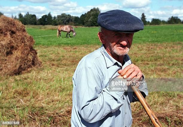Ein alter Landwirt bringt das Heu auf dem Feld ein Feldarbeit Arbeit
