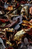 Rustic Autumn Leaves