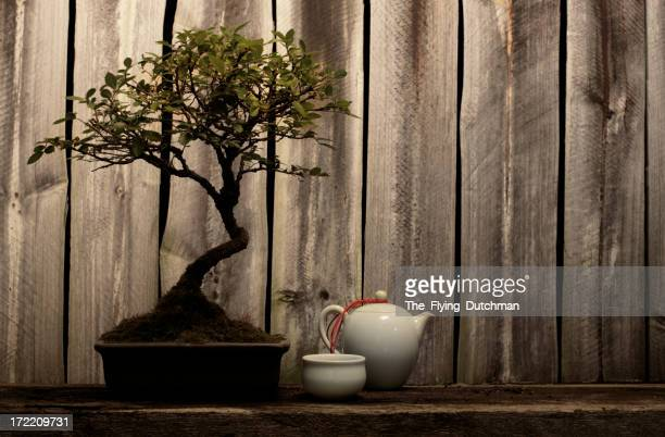 Rustic decorative arrangement of bonsai tree and tea cup