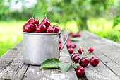 Rustic mug full of red ripe cherries on wooden bench in summer garden.