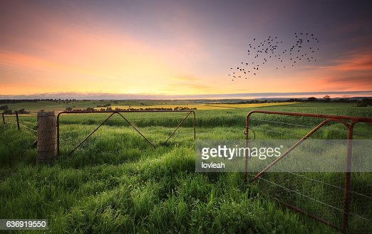 Rusty gates open to wheat and canola crops : Stock Photo
