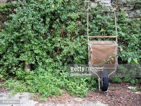 Rusty old wheelbarrow against wall, plants. : Stock Photo