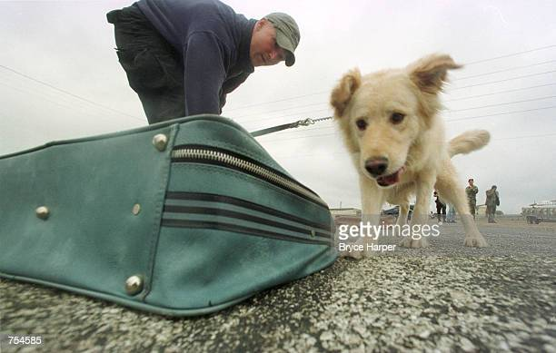 Rusty Smith and his Military Working Dog Ben inspect a suitcase for explosives during a training demonstration January 17 2002 at Lackland Air force...
