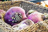 A rutabaga or turnip sitting in a basket at an organic fall harvest market