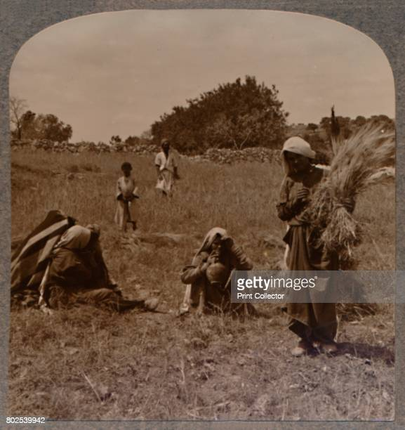 Ruth gleaning in the Fields of Boaz' c1900 From Journey in All Lands Palestine [Realistic Travels London Cape Town Bombay Melbourne Toronto...